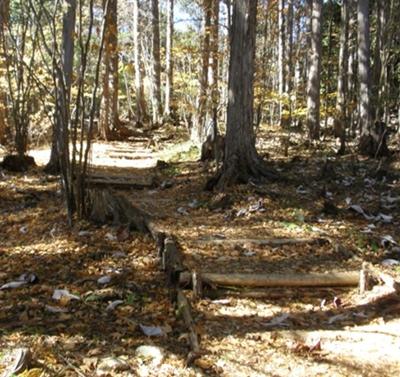 赤沢自然休養林 向山コース