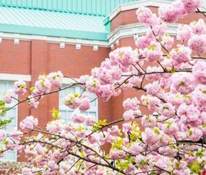 大阪造幣局を見学するには?桜の通り抜けは?