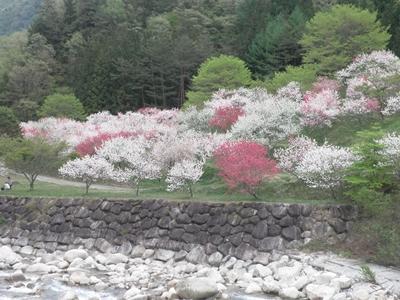 園原花桃祭り